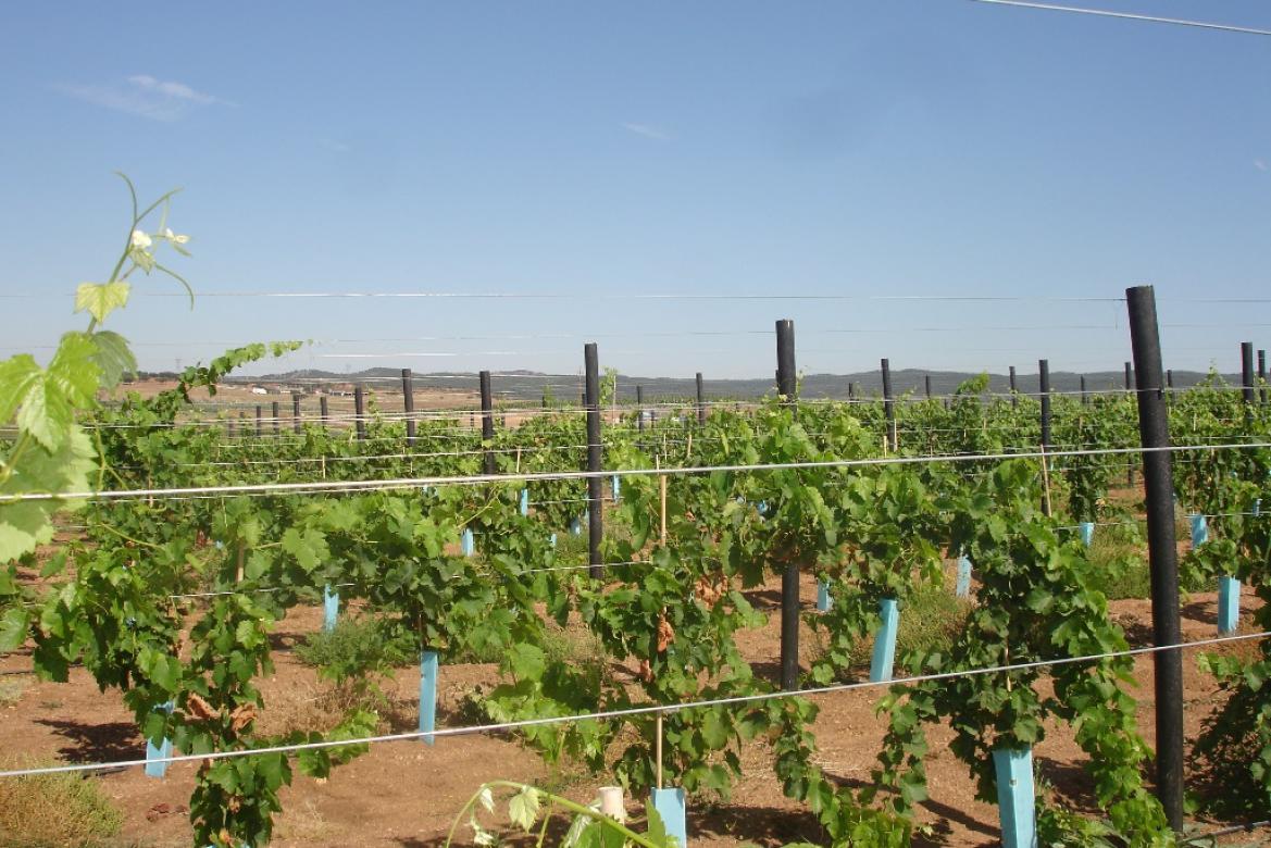 Agricultura e Agropecuária